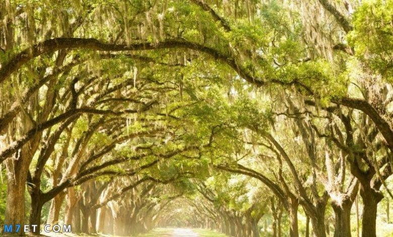 افضل وأجمل غابات العالم