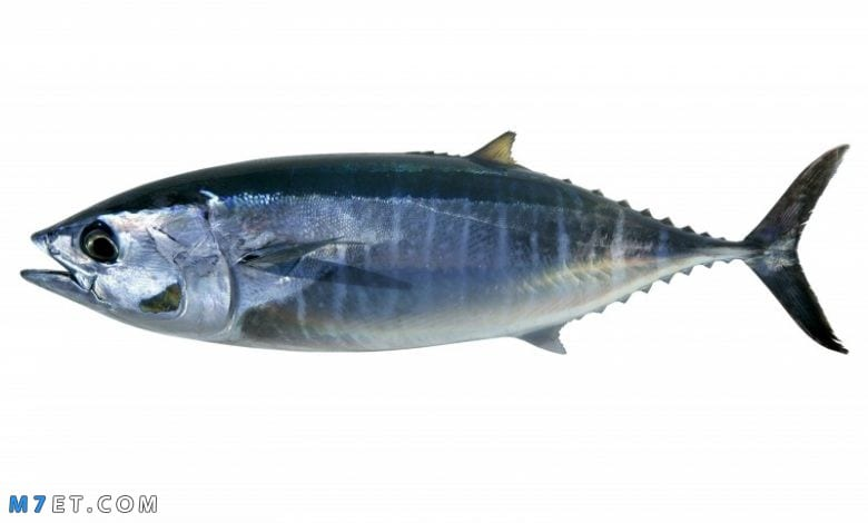 تفسير رؤية سمك في المنام
