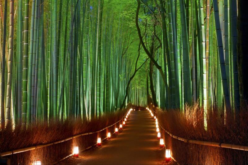 غابات الخيزران – اليابان