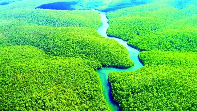 غابة الأمازون – البرازيل