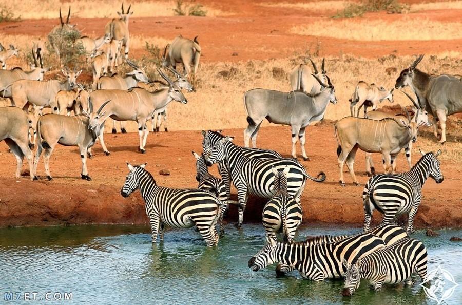 أجمل مناطق سياحية في افريقيا