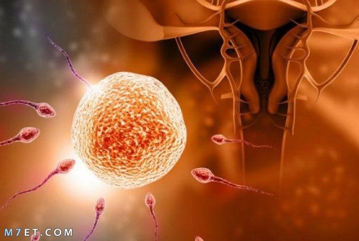 ما هو الحقن المجهري بالتفصيل الممل