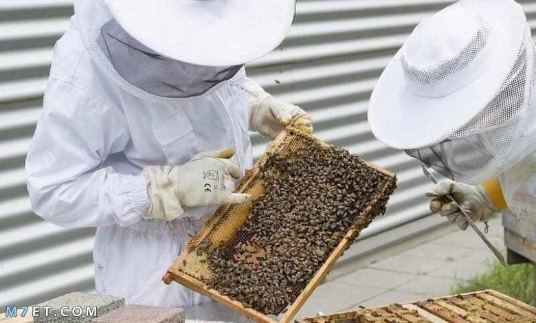 طرق تربية النحل للمبتدئين