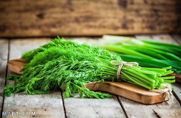 فوائد الشبت الأخضر للجسم
