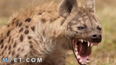 Photo of أسماء حيوانات مفترسة شهيرة