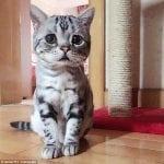 لماذا تبكي القطط؟ وهل تستطيع الرؤية بالليل؟