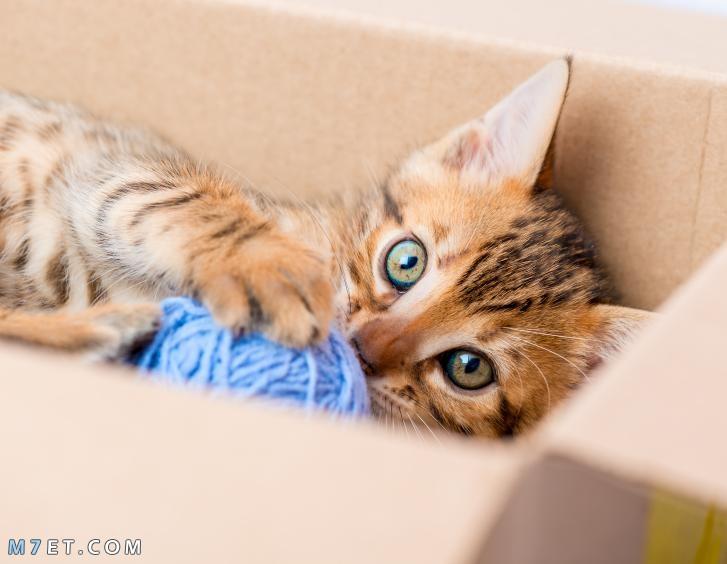 لماذا تدفن القطط فضلاتها