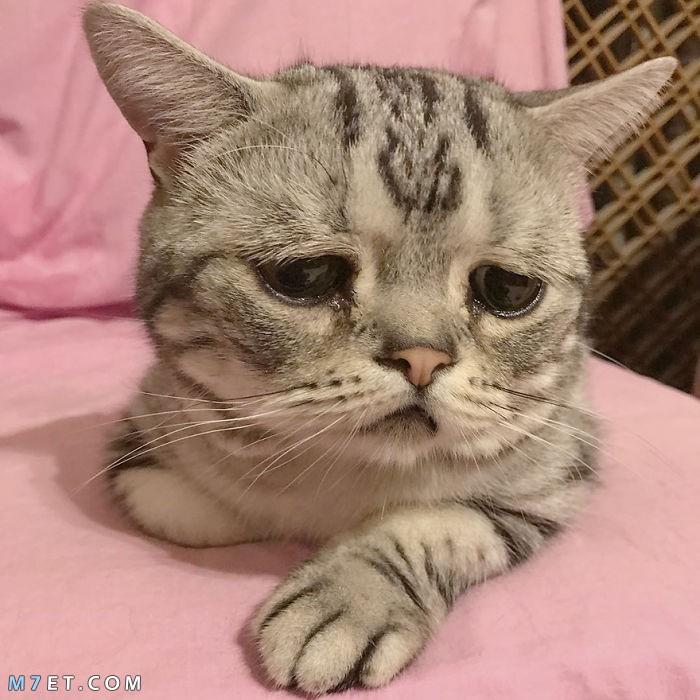 لماذا تبكي القطط؟