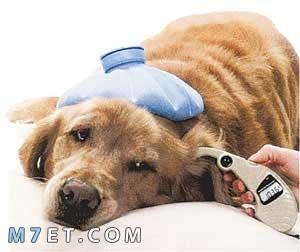 ادويه علاج الاسهال عند الكلاب