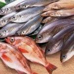 تفسير حلم السمك للمتزوجة في المنام في تفسير كبار المفسرين