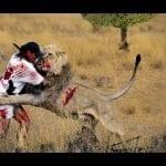 حيوانات مفترسة تأكل البشر أحياء