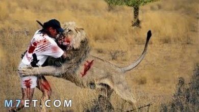 Photo of حيوانات مفترسة تأكل البشر أحياء