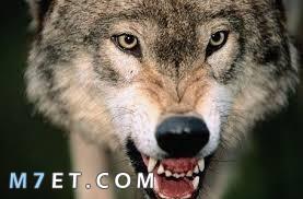 حيوانات مفترسة تأكل البشر