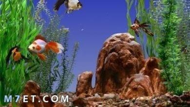 Photo of كيفية إطعام أسماك الزينة وكيفية تحديد نوع الطعام