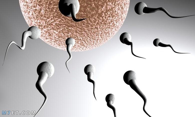 كيف يحدث الحمل بسرعة