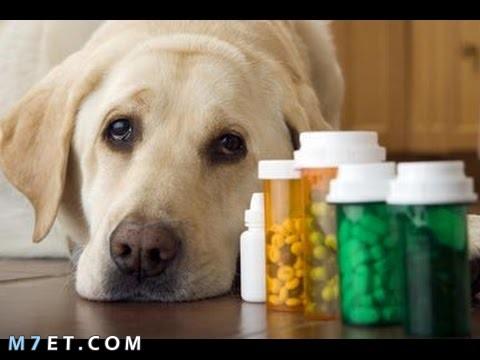 علاج الإسهال عند الكلاب بالاعشاب
