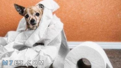 Photo of ما هي ادويه علاج الاسهال عند الكلاب