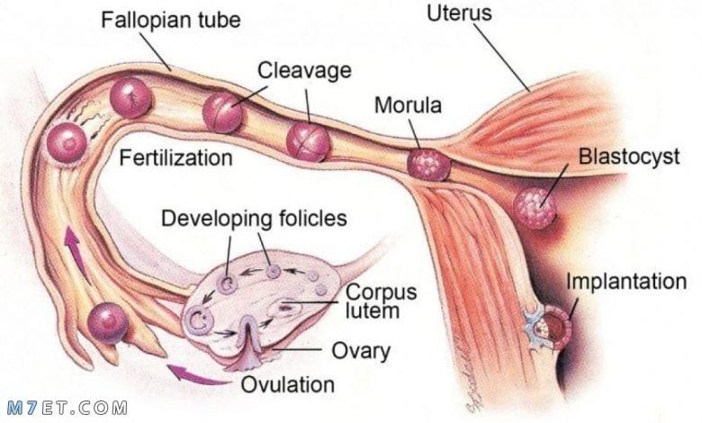 اعراض الدورة الشهرية للمرضعة