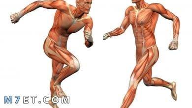 Photo of ما هي اقوى عضلة في جسم الانسان