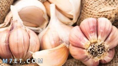 Photo of فوائد الثوم كم فص ثوم يؤكل في اليوم ؟ وما هي اضراره وفوائده