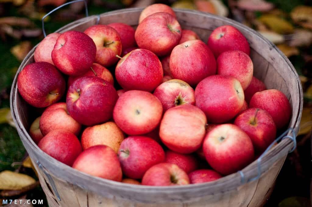 فوائد اكل التفاح للبشرة
