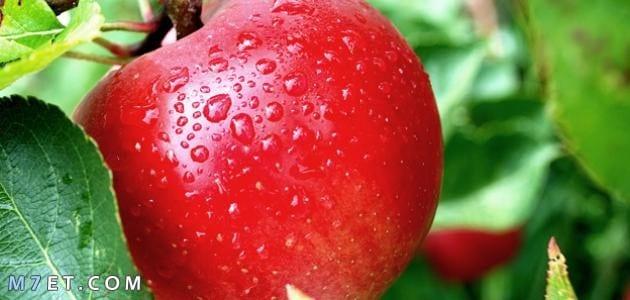 تجربتي مع اكل التفاح للبشرة