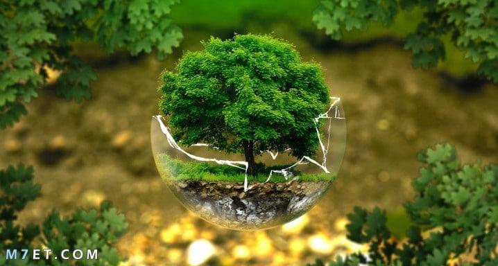 نصائح للحافظ على البيئة