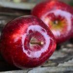 هل اكل التفاح ليلاً مضر وما هي أَََََضراره بصفة عامة