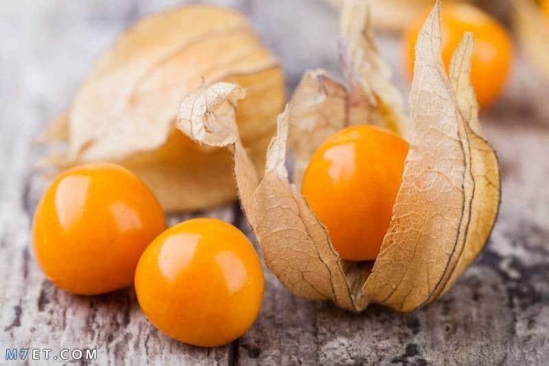 فوائد نبات الحرنكش لصحة الجسم