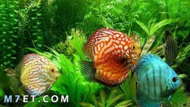 Photo of كافة المعلومات عن أشهر أنواع سمك الزينة للمبتدئين