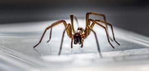 وصفات كيميائية للتخلص من العناكب