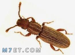 نصائح للتخلص من حشرة السوس