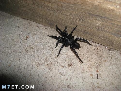 اسباب انتشار العنكبوت في المنزل وطرق التخلص منه