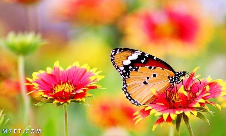 اجمل صور طبيعية في العالم