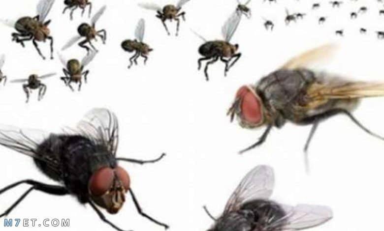 طرق التخلص من الذباب وأسباب ظهوره بالمنازل