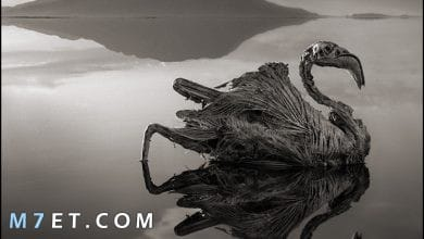 Photo of بحيرة النطرون العجيبة وأهم أسرارها