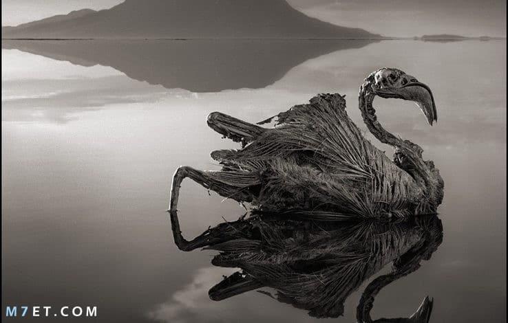 بحيرة النطرون