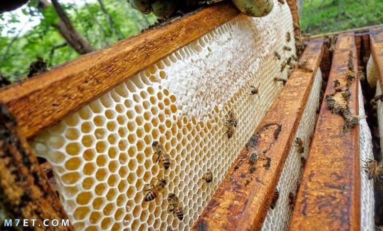 التخلص من خلية النحل