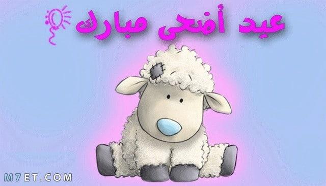 اجمل صور خروف العيد