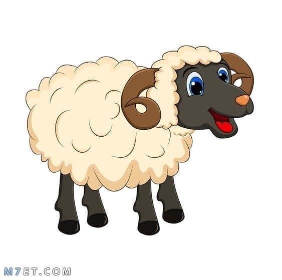 سكرابز خروف ثيمات عيد الاضحى