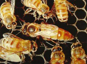 طرق بسيطة للتخلص من خلية النحل