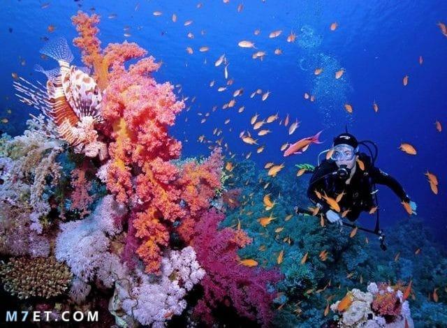 أسرار وعجائب عالم البحار