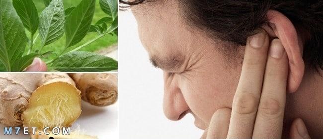 علاج التهاب الاذن بالاعشاب
