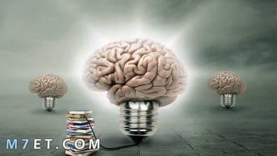 Photo of فوائد القراءة للعقل والنفس وأهميتها