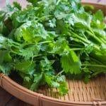 فوائد الكزبرة الخضراء لصحة الجسم علميا