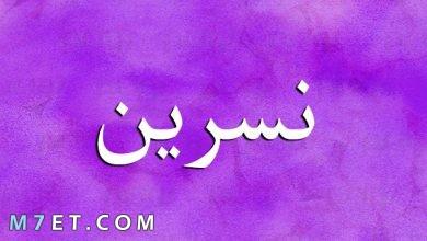 Photo of معنى اسم نسرين وصفات حاملي هذا الإسم