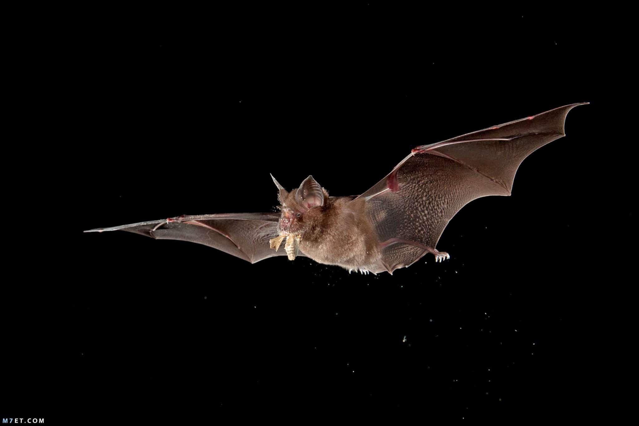 معلومات عن الخفاش غريبة جدا