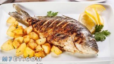 Photo of أفضل وصفات السمك الشهية من المطاعم