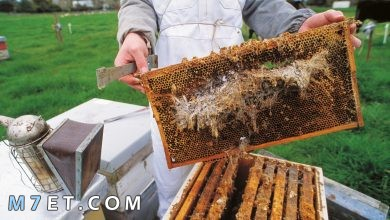 Photo of طريقة تربية النحل من الألف إلى الياء