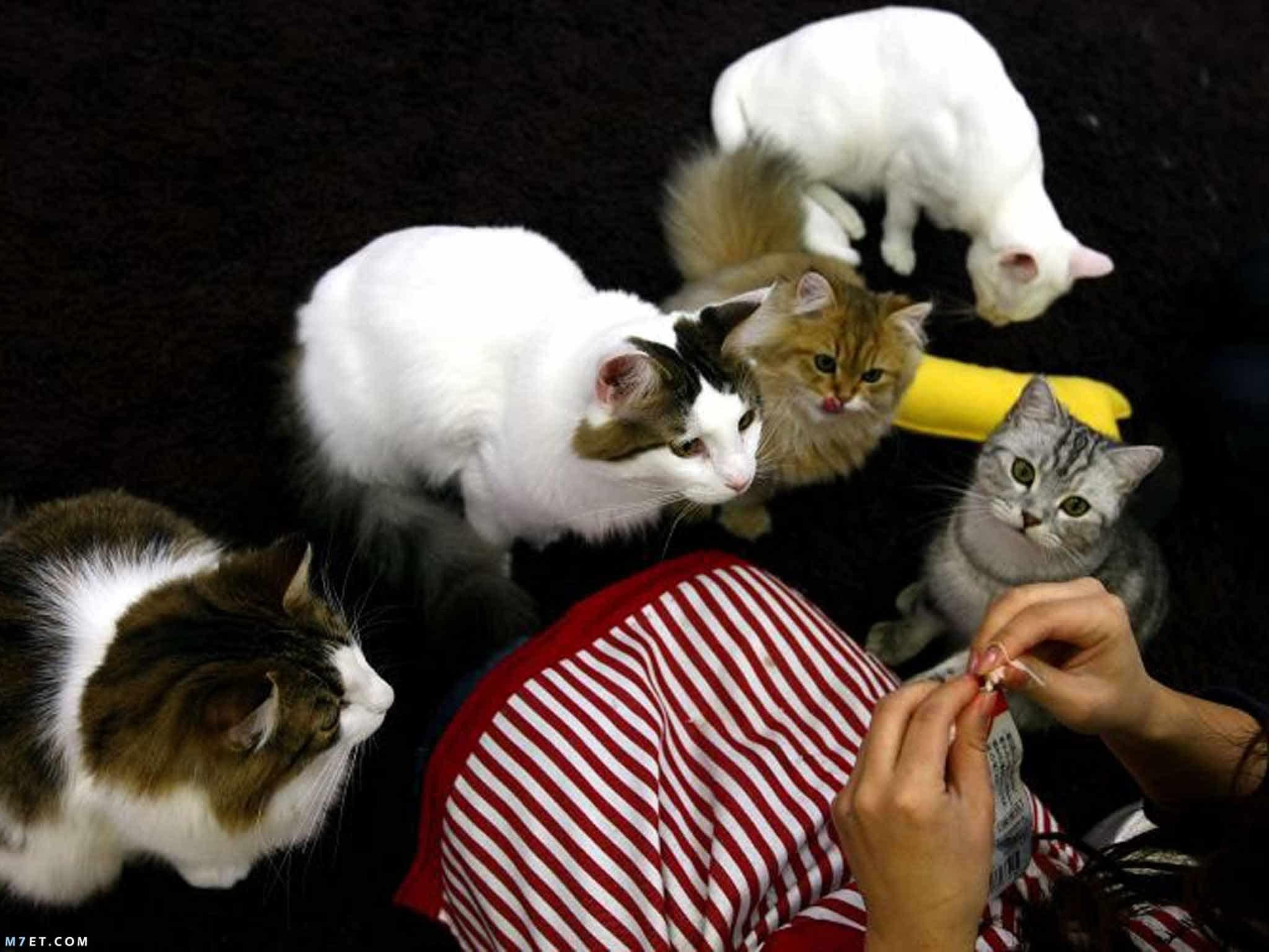 حركات القطط ومعانيها